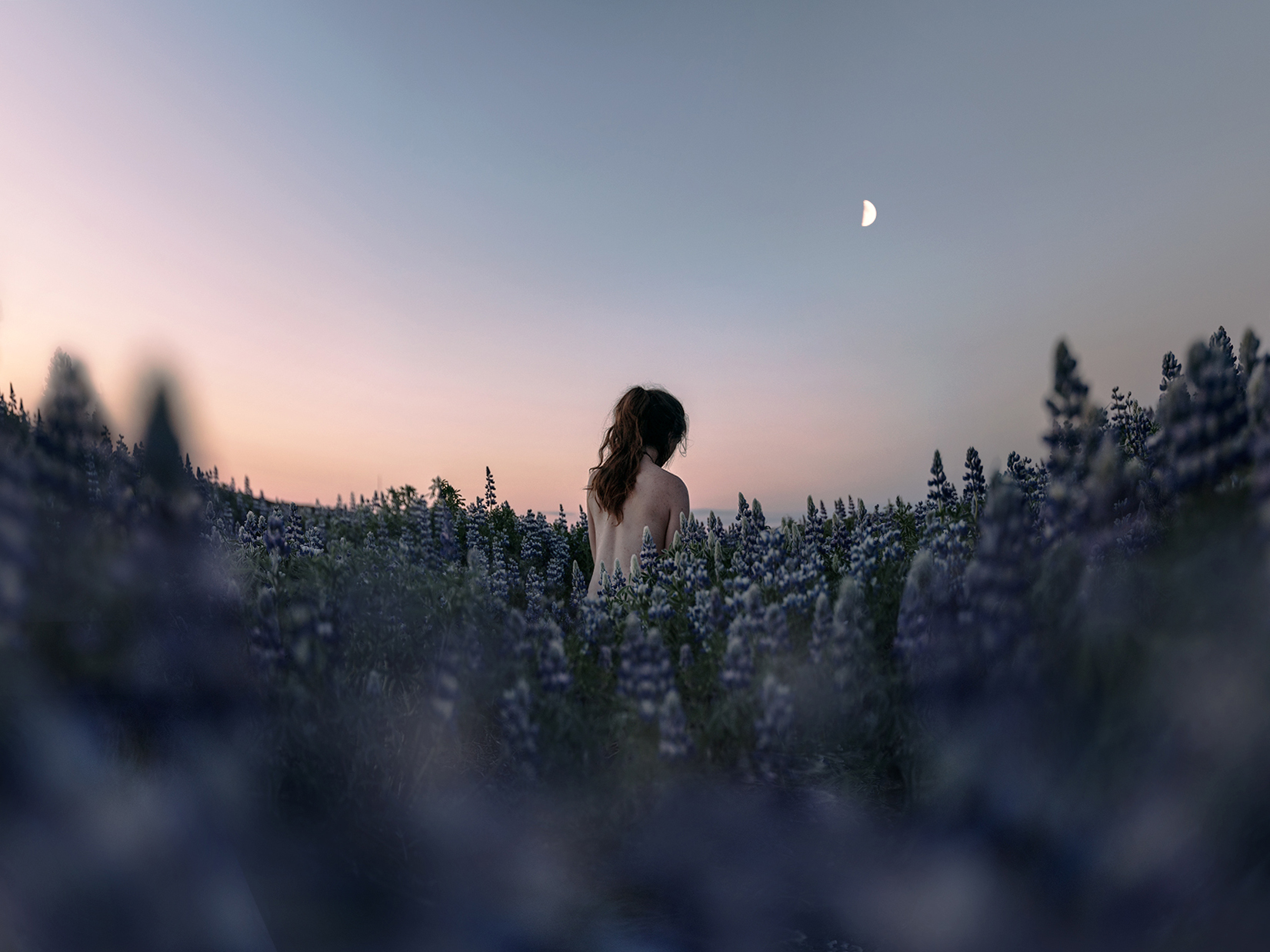Fine art photography showing the nude back of a woman in a lupine field at moonrise.