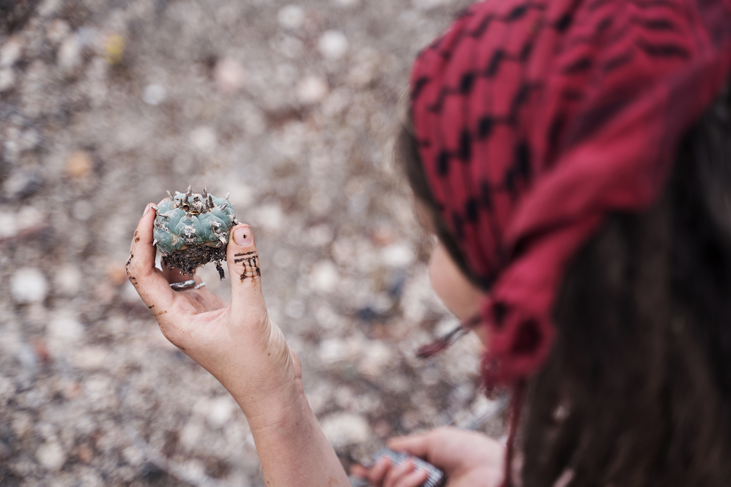 A woman holding a Peyote cactus in her hand.
